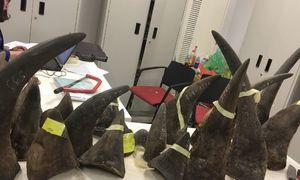 Vietnam, US launch joint project to combat wildlife crime