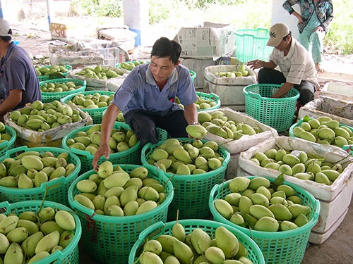 Tropical delicacy: Vietnamese agricultural products rack in big cash at global markets - 7
