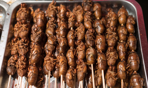 (Another) bizarre food in Vietnam: Behind the crunchy sound of cicadas