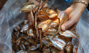 The hunt for spicy fish delicacy deep down Vietnam's hydropower dam