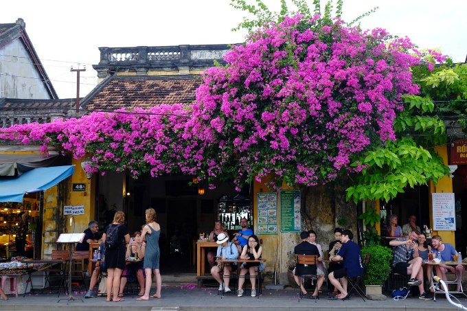 Hoi An enjoys a floral explosion in summer - 3