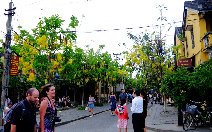Hoi An enjoys a floral explosion in summer - 1