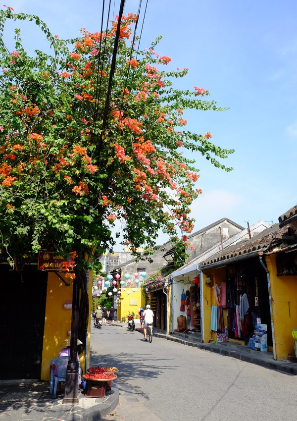 Hoi An enjoys a floral explosion in summer - 4