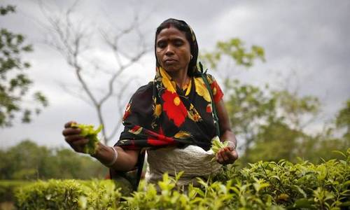 Expose of labor abuse brews trouble for 'slave-free' Indian tea