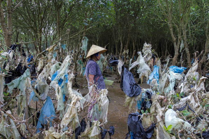 This picture taken on May 18, 2018 shows a woman gathering shells in a coastal forest littered with plastic waste stuck in branches after being washed up by rising coastal tide in Thanh Hoa Province. Photo by AFP/Nhac Nguyen