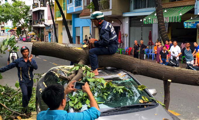 Workers cut off branches from a tree that felled on Hoang Sa Street in Phu Nhuan District, crushing a car badly. The driver survived.