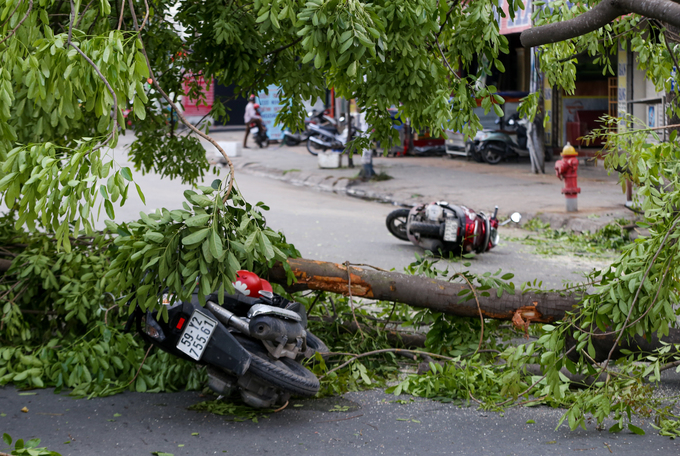 Two motorbikes are seen knocked down and at least three  passengers were injured. Thanh Long, a vendor on the street, said the mahogany tree was uprooted  after around 10 minutes of strong wind. The tree was around 20 years  old, he said.