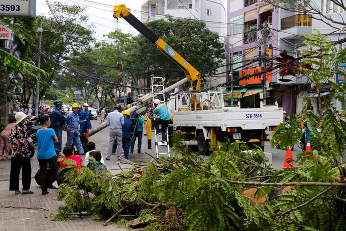 Another tree on Rach Bung Binh Street, District 3, has collapsed an electric pole and sent a traveler to hospital.