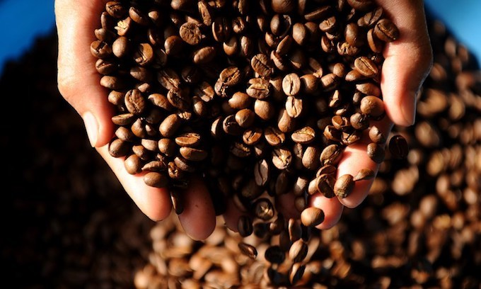 Vietnamese coffee prices keep dipping