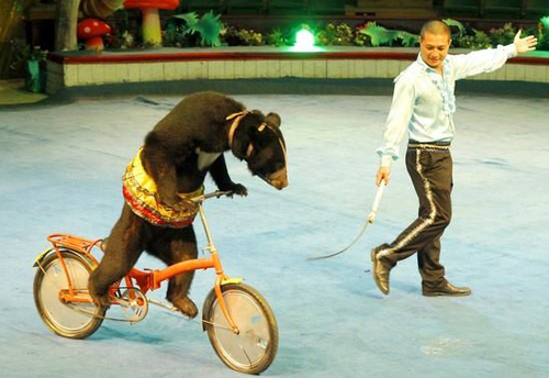 Vietnam circuses accused of animal abuse
