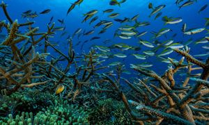 Flood damage would double without coral reefs: study