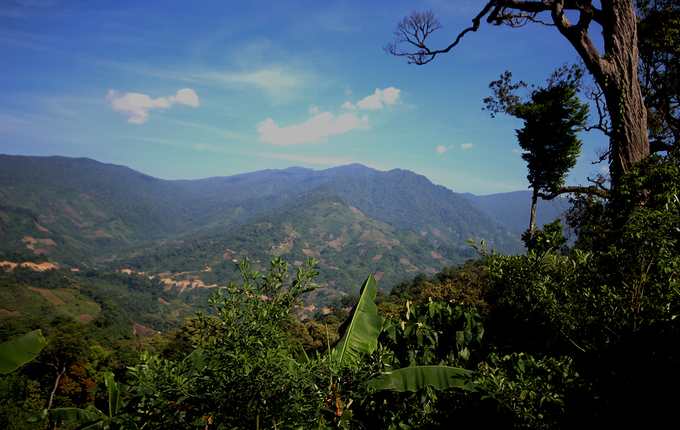 A full view of Ngoc Linh mountain.The mountain is 2,500 meters high, spanning the three provinces of Quang Ngai, Kon Tum and Quang Nam.People grow ginsengs within the jungles of the central province of Quang Nam, Tra Linh Commune, Nam Tra My District.