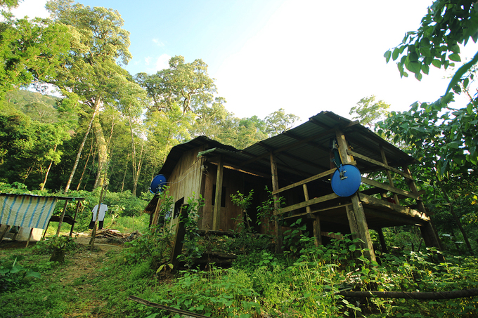 A house for ginseng growers in the jungle.These people eat and sleep right here in the jungle to protect the ginsengs from thieves.
