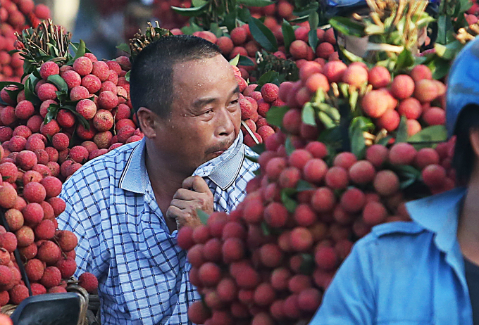 My family harvested roughly 10 tons of lychee. This is the first batch of the season market price is high, even higher than best looking lychee. My family sells one ton per week, Ngo Xuan Phuc shared as he wiped of the sweats as he also swallowed by the heavy traffic.