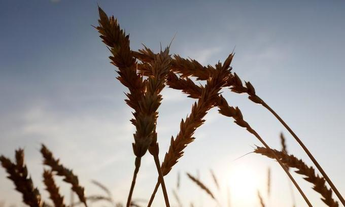 Russia becomes Vietnam's top wheat supplier