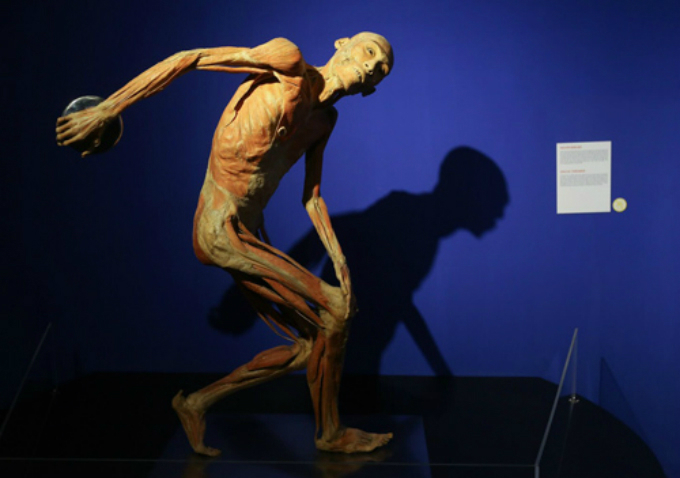 Saigon exhibition stirs debates for displaying real human organs