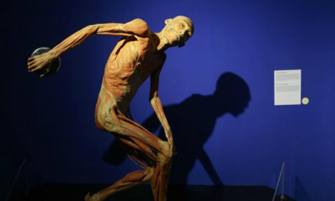 Saigon exhibition stirs debates for displaying real human organs