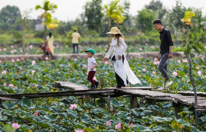Saigons lotus kingdom blooms in summer - 6