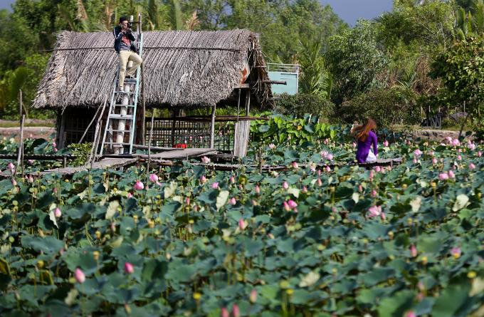 Saigons lotus kingdom blooms in summer - 2