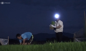 Vietnam farmers switch to night shift to escape scorching sun