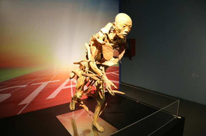 Exhibition of real body parts suspended in Vietnam