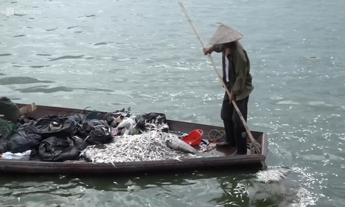 Hanoi's West Lake stinks again as fish die en masse