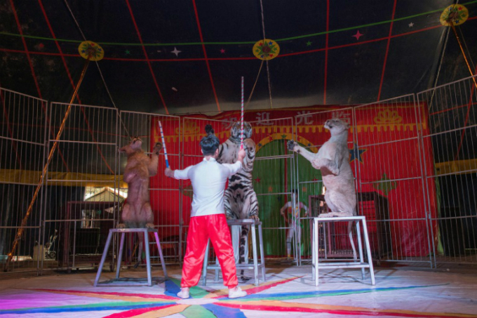China has some of the worlds laxest animal rights laws, and campaigners have long called for tougher regulations on the treatment of animals in travelling circuses.