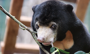 A rescued bear basks in the sun
