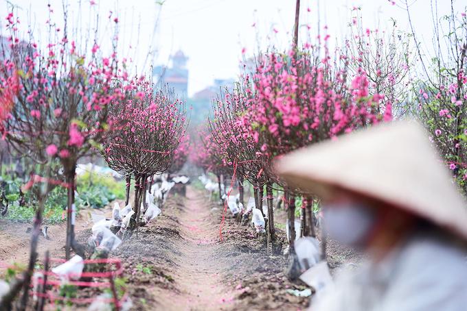 Vietnam's 2019 holiday plan includes 9-day Tet break