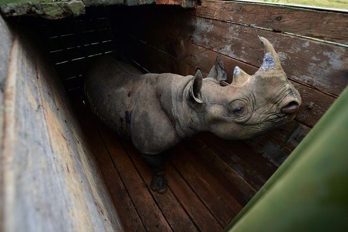 Ninth rhino dead after failed move to new park in Kenya