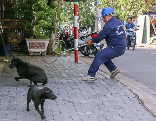 A city workers tries to capture a runaway dog without a muzzle. Photo by VnExpress/Tuyet Nguyen