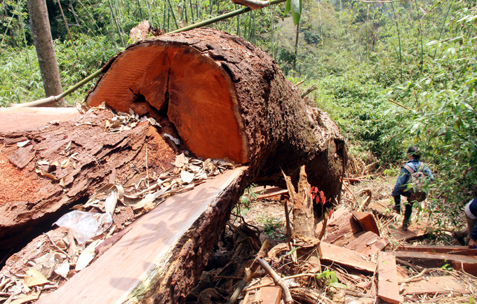 Greater Mekong, including Vietnam, losing forests at alarming rate