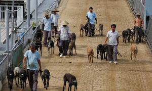 Macau authorities adopt over 600 greyhounds from closed dog track