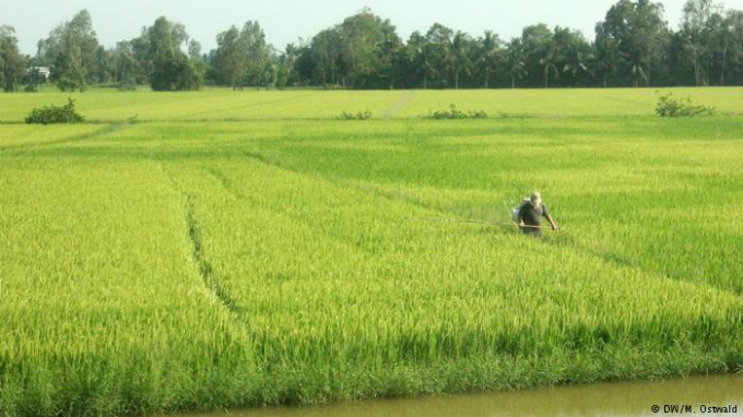Fertile region: The bright green of the rice fields stand in stark contrast with the brown-greyish water. Due to the warm weather and the water the Mekong Delta is a very fertile region.