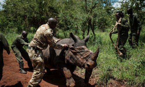 Over 100 wildlife rangers died on duty in past year: WWF