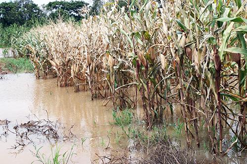 Floods hit Mekong Delta farmers after Laos dam bursts