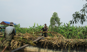 Ban sugar imports, tax other sweeteners, Vietnamese government urged