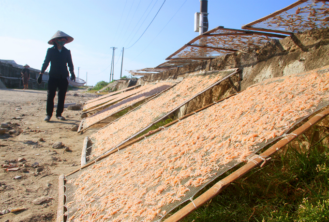Villager uses net to dry up krill since it can be turned into different dishes.We dry up krill or turn it into shrimp paste to sell at a higher price at VND30,000-VND40,000 per kilogram. However, this process consumes lots of time as it would takes months to turn it into the final product, a local villager said.