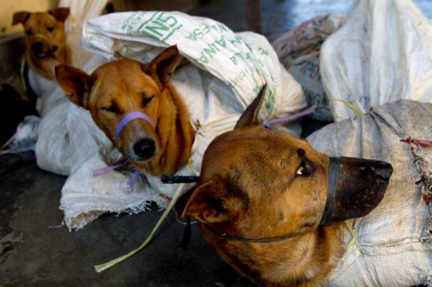 Indonesia works to ban trade of meat from pets, exotic animals