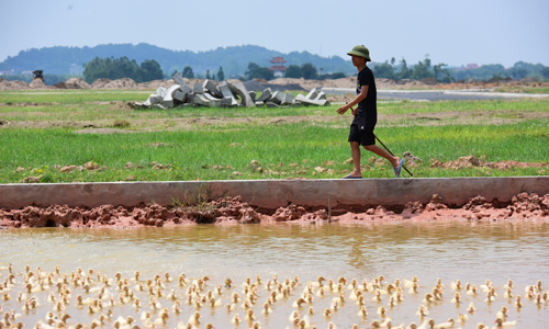 Land left unused for years by 211 Hanoi projects