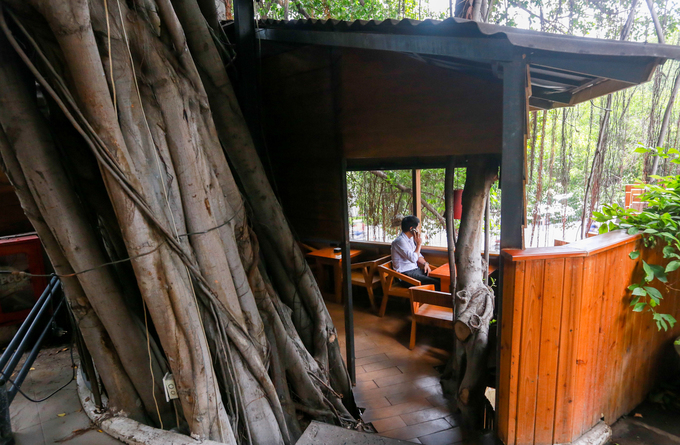 A Saigon café climbs trees to serve its customers - 5