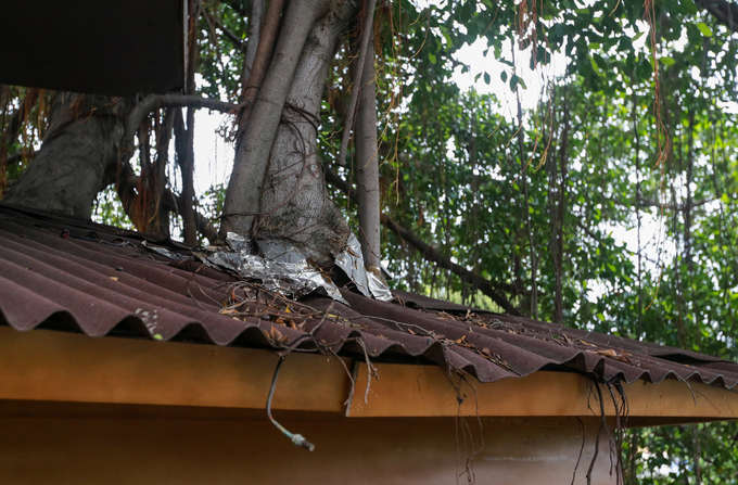 A Saigon café climbs trees to serve its customers - 4