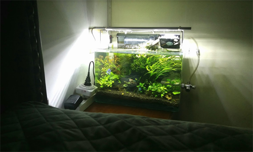 Dinh Chinh, currenly lives at Dong Da District, shared I put the fish tank lamp right next to my bed as my bed time light, and look at it when I could not sleep. I have a good water purifier so the sound comes out mimic the waterfall, I feel soothing just listen to that sound.