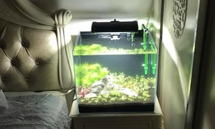 Fish tank lamp returns to the bedroom in Vietnam