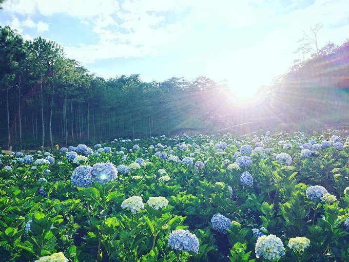 8 Things You Cant Miss When Visiting Dalat This Holiday - 7