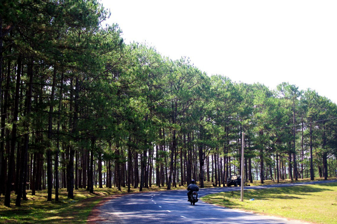 8 Things You Cant Miss When Visiting Dalat This Holiday - 4