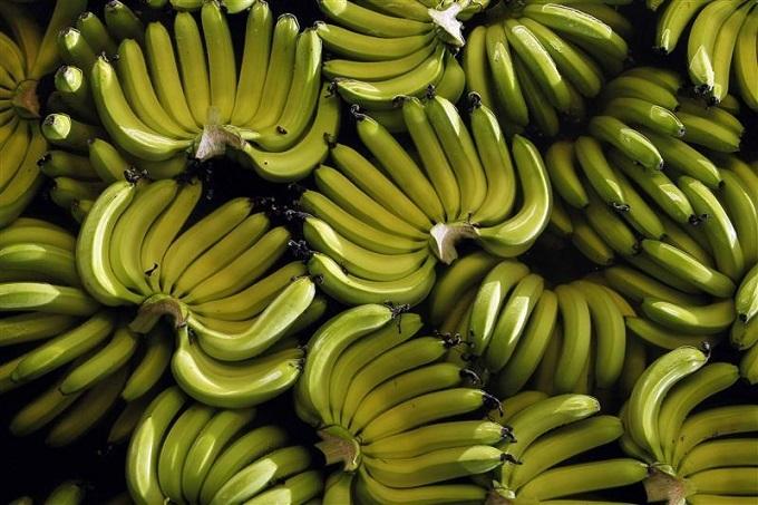 Hoang Anh Gia Lai to expand banana farming for China export