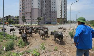 Hanoi's development hoax upturns 200,000 lives