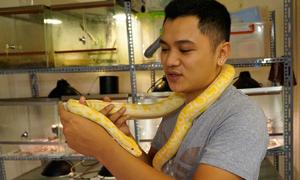 Nursing snakes in Hanoi's bosom