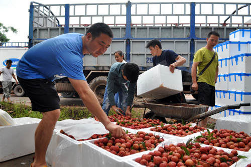Vietnam's low-tech agriculture startups fail to interest investors